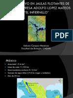 24_ Antonio Campos Mendoza.pdf