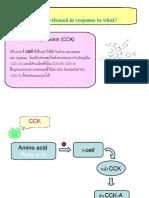 CCK Hormone