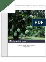 Proyecto de Mantenimiento y Producción de Productores de Mangos de Azua