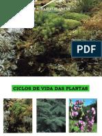 ciclos de vida das plantas