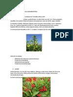 biotecnologia tarea