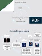 Sistema Nervioso Central - Psicologia.pptx