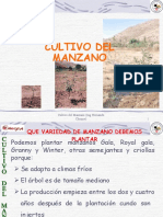 cultivodelmanzano-110115105810-phpapp01.pdf
