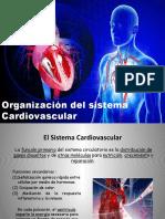 funcion_Cardiaca_4(2).pptx