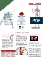 Triptico Sistema Circulatorio aiep