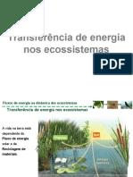 7.1. Transferência de energia nos ecossistemas