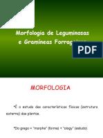 Aula 3- Morfologia detalhada gramineas e leguminosas