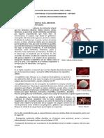 Actividad 2. Sistema circulatorio.