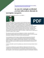 Contagio accidental  por Micobactrium T. en cirugía de  perros