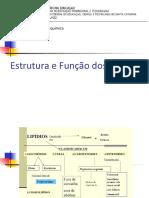 Lipídios - Estrutura e Função
