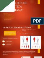 AMPLIACION-DE-LA-GENETICA-MENDELIANA-nuevo