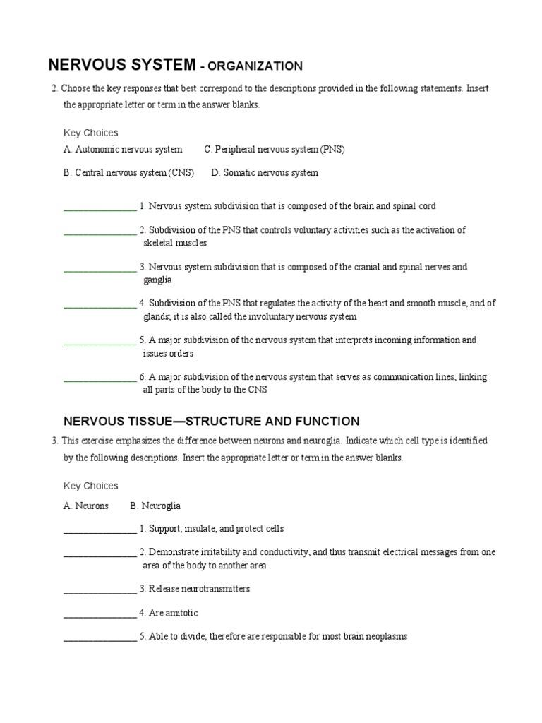 A&P Coloring Nervous Worksheet pdf   Nervous System   Autonomic ...