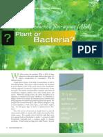 afa plant or bacteria