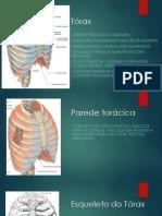 6.3 Tórax - aula.pdf