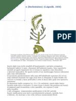 scheda-cystoseira-sedoides.pdf