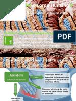 6_equilibrio_digestivo.pptx