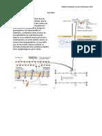 Penicilina.pdf