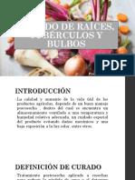 CURADO DE RAÍCES, TUBÉRCULOS Y BULBOS