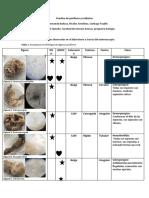 Practica de poríferos y cnidarios (1)