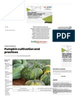 Pumpkin cultivation and practices