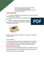 LOS MOLUSCOS.docx