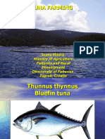 Tuna Farming - Ivana Miletic