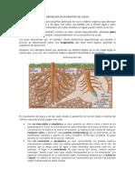 ABSORCION DE NUTRIENTES DEL SUELO