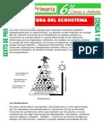 Estructura-del-Ecosistema-para-septimo