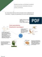 Procesos psicológicos básicos de aprendizaje