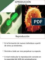 25. Reproducción.pptx