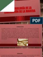 La Tecnología de La Laminación de La Madera