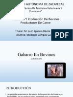 Gabarro En Bovino.pptx  -  Autorecuperado.pptx