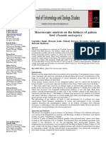 Macroscopic analysis on the kidneys of guinea fowl (Numida meleagris)