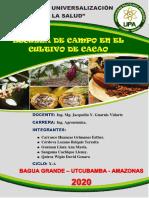 PROGRAMA  N°1 SESIÓN DE APRENDIZAJE - CACAO