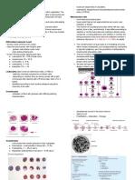 Leukocytes-WBCs.pdf