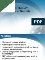 Apoptosis & Necrosis