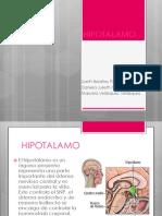 hipotalamo.pdf