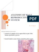 Anatomy of male reproductive system