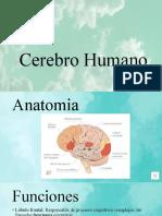 Cerebro Humano.pptx