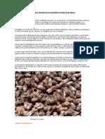 5.Introducción al mundo de las abejas).pdf