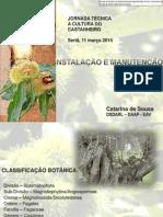castanheiros-variedades