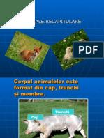 animale ppt
