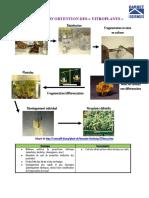 Les vitroplants.pdf