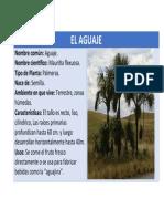 EL AGUAJE.docx