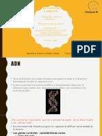 mecanismo de reaccion del adn