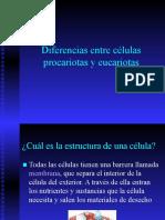 B1 Células procariotas