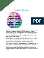 el cerebro Procesamiento de la informacion.docx