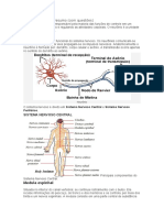 Sistema nervoso imprimir na faculdade.docx