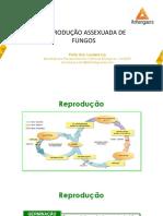 REPRODUÇÃO +ASSEXUADA+DE+FUNGOS