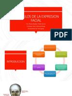 MUSCULOS DE LA EXPRESION FACIAL  Presentacion